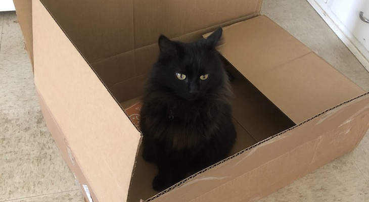 Cat of the Week: Nori title=
