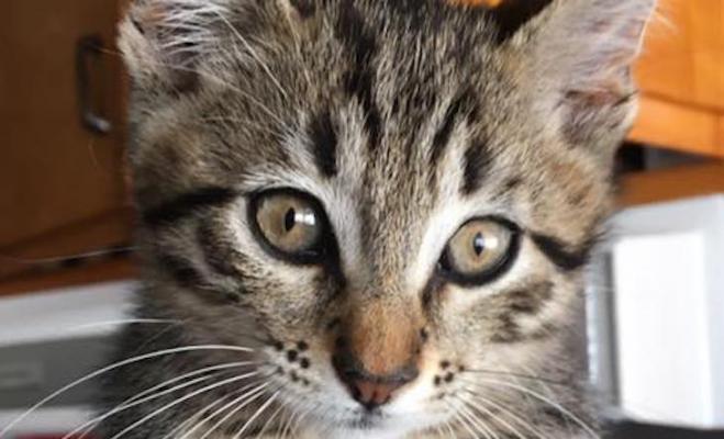 Cat of the Week: Stevie
