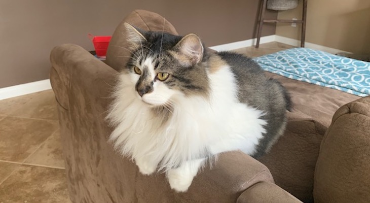 Cats of the Week: Lulu and Oliver title=