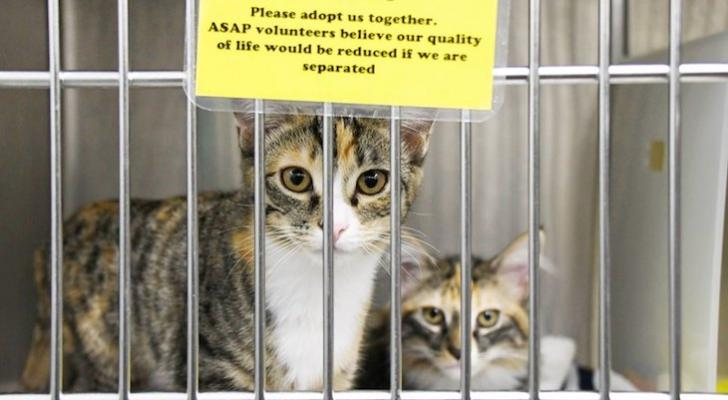 Cat of the Week: Bernadette & Josephine title=