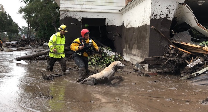 Fire Department Scent Search Dog Announces Retirement