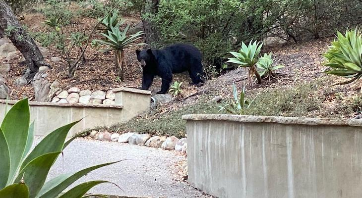 Black Bear Sightings Near Parma Park