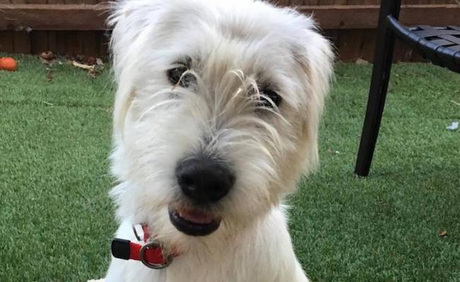 Dog of the Week: Jollie