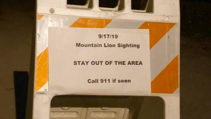 Mountain Lion Seen at Devereux Lagoon