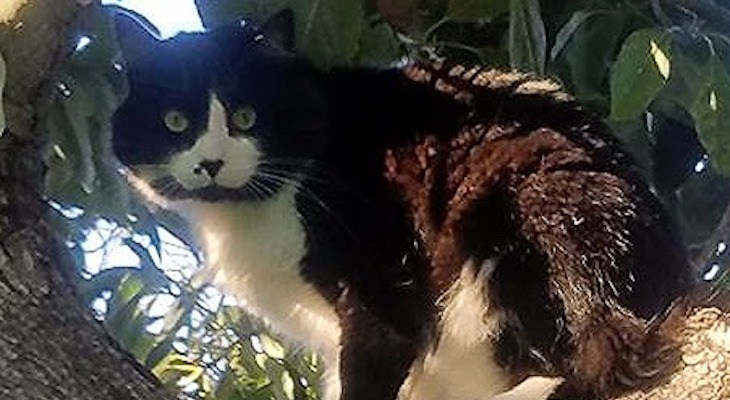 Cat of the Week: Scabby title=