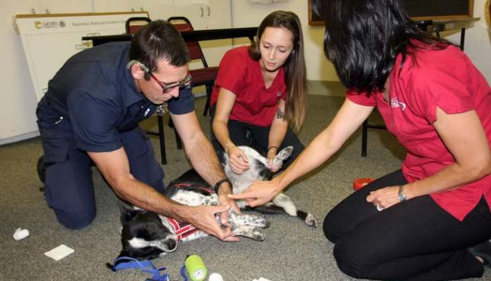 Firefighters Learn How to Care for Pets During Emergencies
