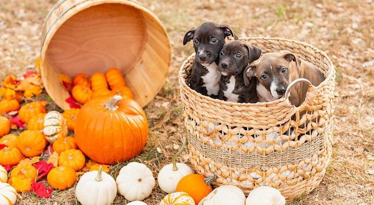 Dogs of the Week: Reggie, Ruthie, Rex, Roxy & Rosie title=