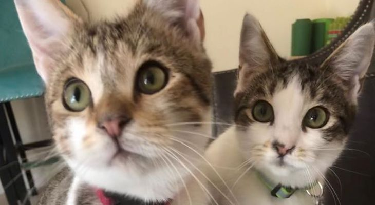 Cats of the Week: Jack and Jolene