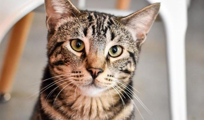 Cat of the Week: Turnip