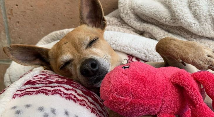Humane Society Adopts Socially Conscious Sheltering Approach