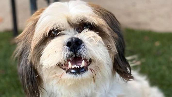 Dog of the Week: Dunkin