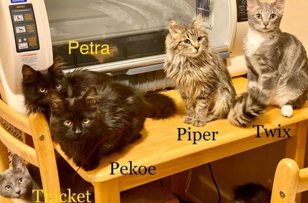 Adoptable Kittens from Spark Rescue