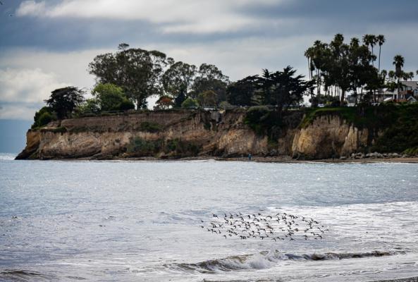 Birds at Shoreline