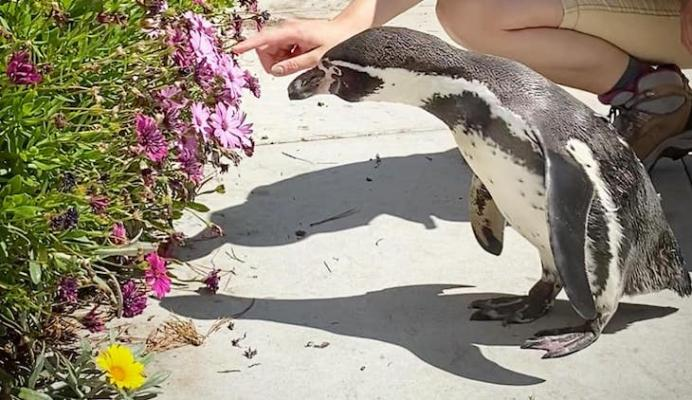 Santa Barbara Zoo Seeks Donations During COVID-19 Pandemic
