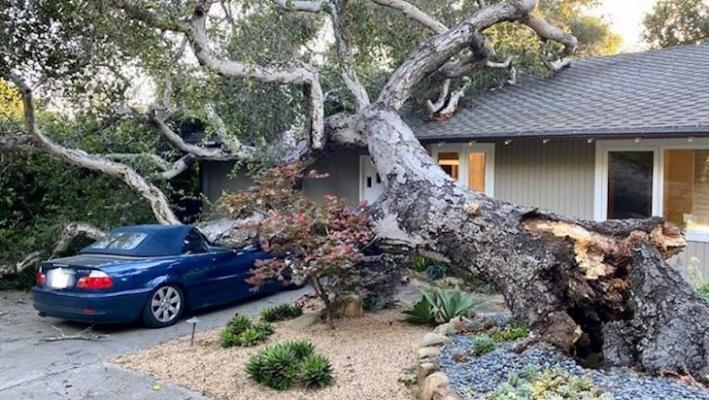 Strong Winds Topple Trees