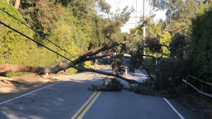 Tree and Power Lines Down in Montecito