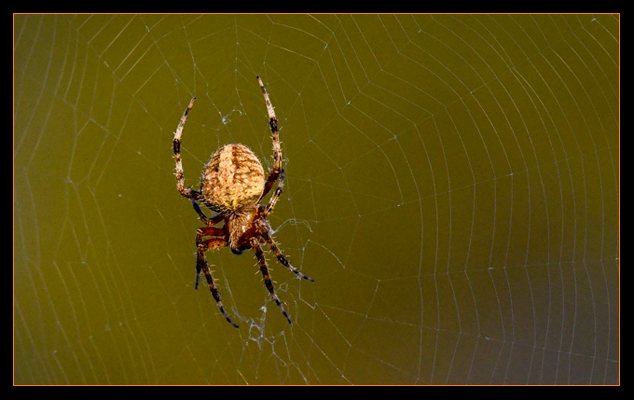 Walking Into an Orb Weaver title=