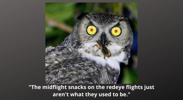 Owl Caption Contest Winner Announced title=