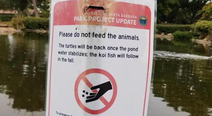Alice Keck Park Memorial Garden Pond Update title=