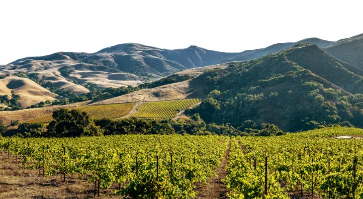 Lawsuit Seeks to Shut Down Busy Bee's Organics in Wine Country