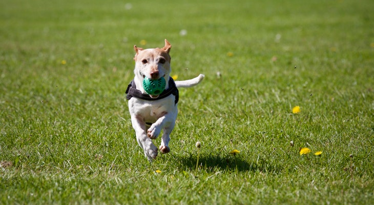 Off-Leash Dog Area Opens at MacKenzie Park title=