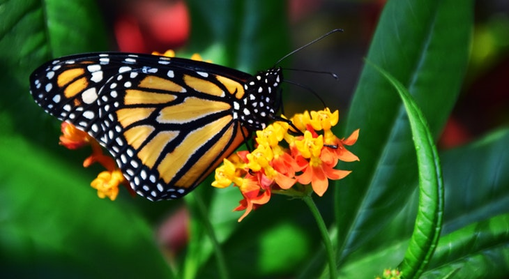More Needs to be Done to Save the Monarch Butterfly title=
