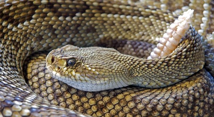Rattlesnake Season is Upon Us