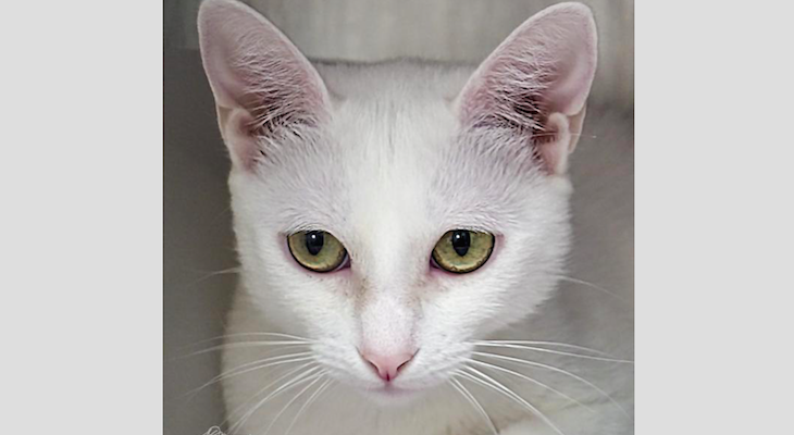Cat of the Week: Anna title=