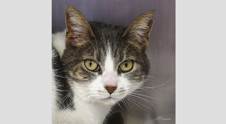 Cat of the Week: Jilly title=