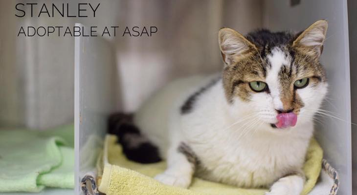 Cat of the Week: Stanley