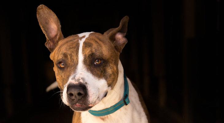 Dog of the Week: Beau title=