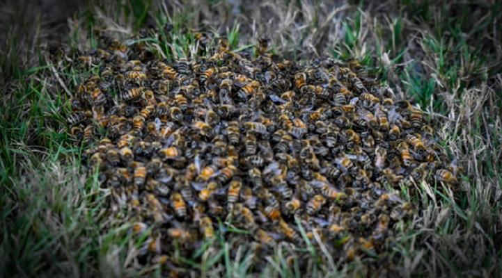 Anyone An Expert on Honeybees?