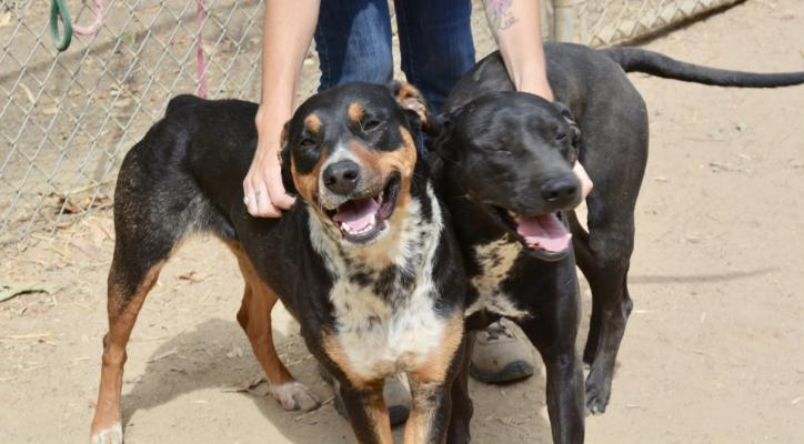 Dogs of the Week: Rhonda & Sylvester
