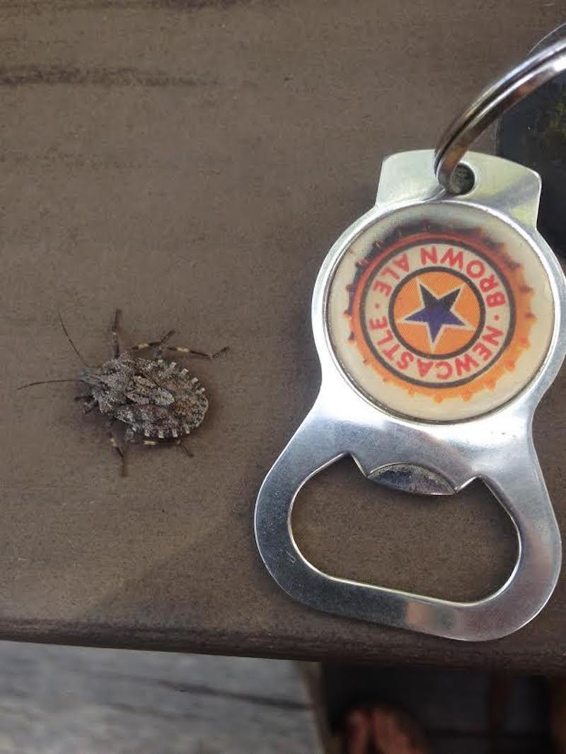 Patterned Beetle Bug ID