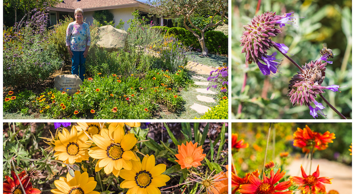 Carpinteria Resident Wins the WaterWise Garden Recognition Contest