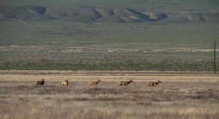 Trump Administration Again Approves Oil Drilling in Carrizo Plain title=