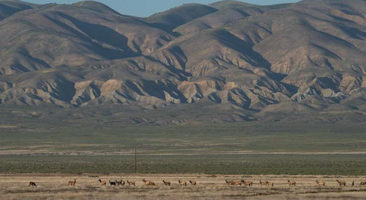 Appeal Upheld in Challenge to Oil Drilling in California's Carrizo Plain