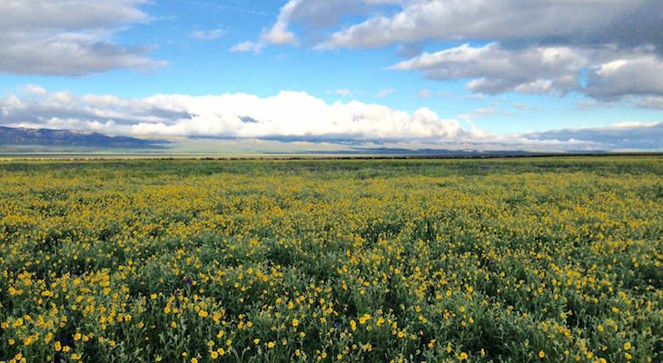 Fate of the Carrizo Plain National Monument Still Unknown