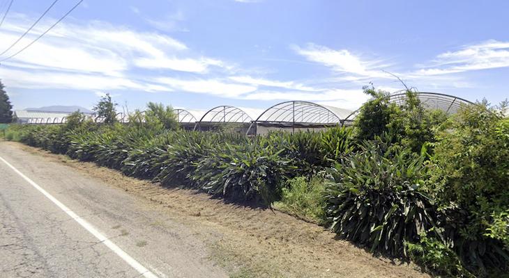 Carpinteria Residents Sue Neighboring Marijuana Growers Over Smell title=