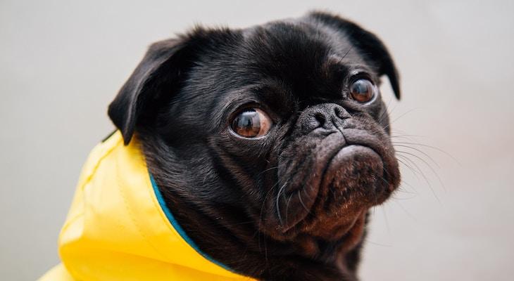 Canine Parvovirus on the Rise