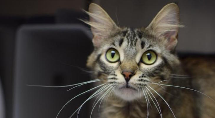 Cat of the Week: Charlotte
