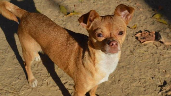 Dog of the Week: Chico title=