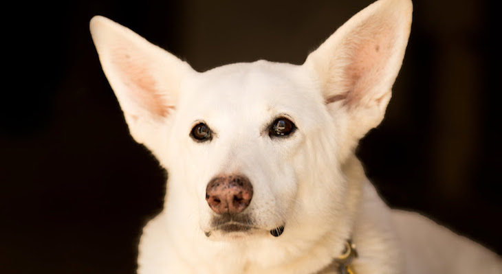 Dog of the Week: Chloë title=