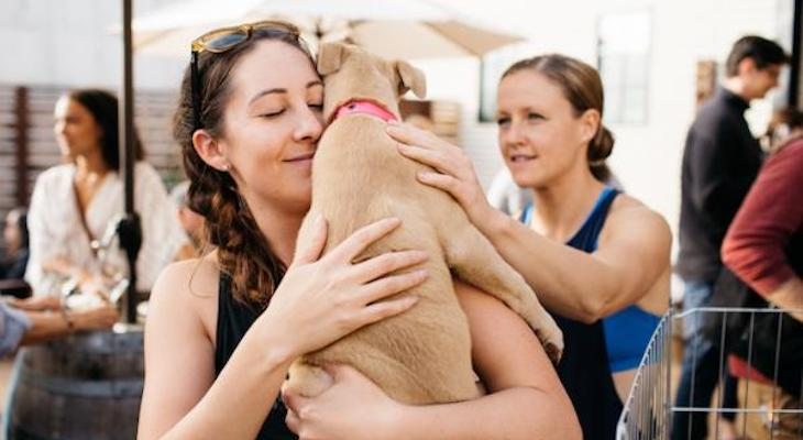 Event Highlight: Wine & Woofs Adoption Event