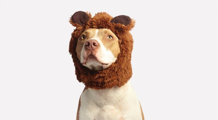 Pet Costume Contest Winners!