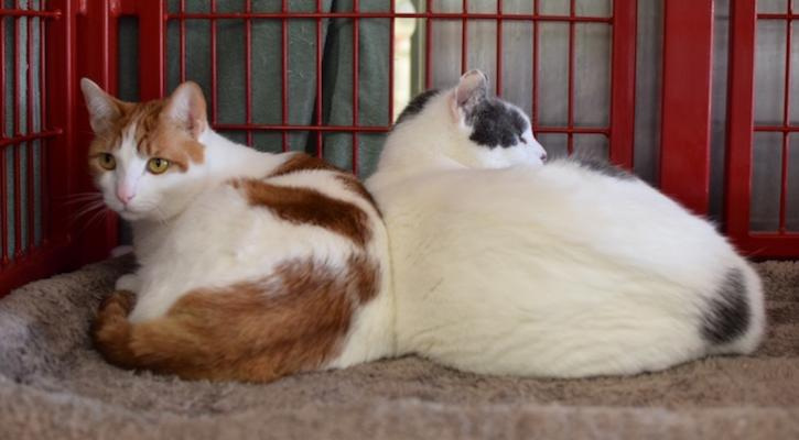 Cats of the Week: Huang Se and Hei Se