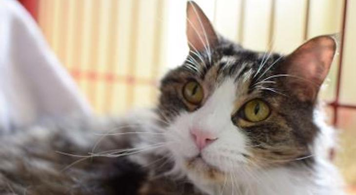 Cat of the Week: Tiger