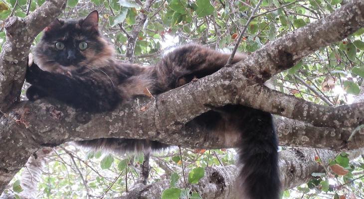Cat of the Week: Cybèle