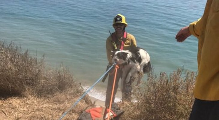 Dog Rescued From More Mesa Cliff