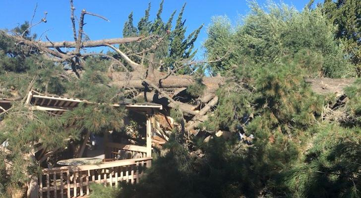100-Foot Tree Fell on Orcutt Home title=